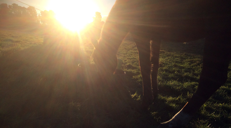 A horse needs at least 1% of bodyweight in roughage (pasture and/or hay) to maintain bodyweight.
