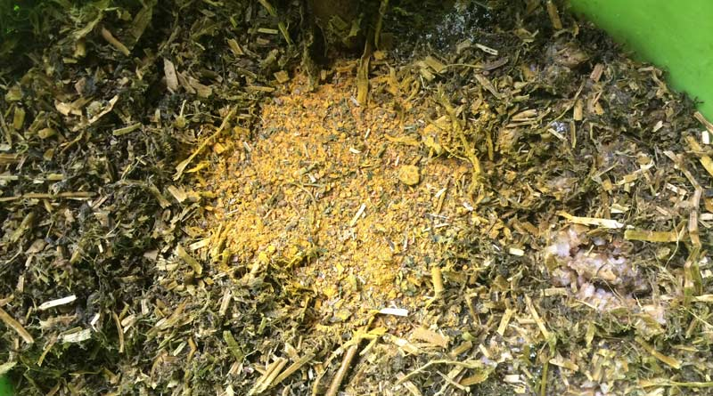 Any herbs added to a horse's diet must be chosen carefully.